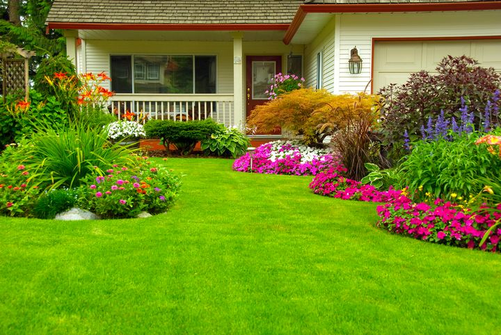 Choose High-Quality Grass Seeds For Creating A Great Lawn
